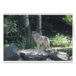 Timber Wolf Cards