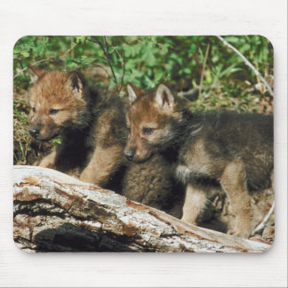Timber wolf cubs mouse pad