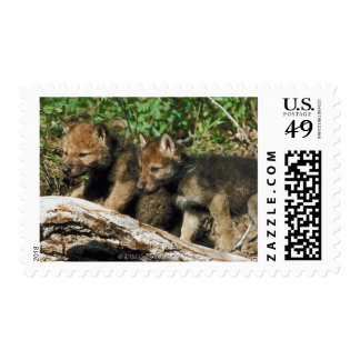 Timber wolf cubs postage