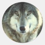 Timber-Wolf from JungleWalk.com Round Sticker