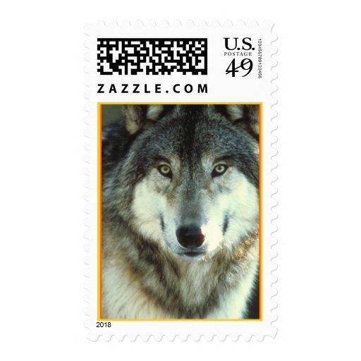 Timber Wolf from Junglewalk.com Stamp