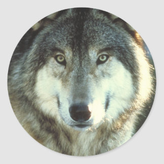 Timber-Wolf from JungleWalk.com Stickers