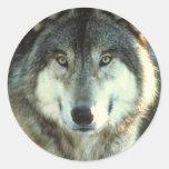 Timber-Wolf from JungleWalk.com Stickers