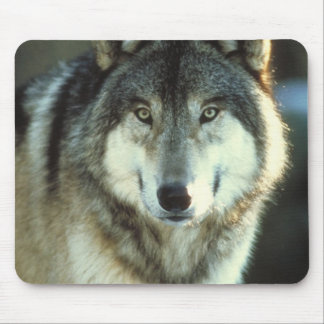 Timber-Wolf from JungleWalk Mouse Pad