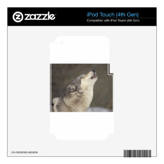Timber Wolf Howling Decal For iPod Touch 4G