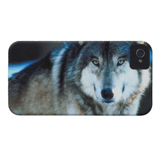 Timber Wolf iPhone 4 Cover