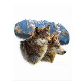 timber wolf.jpg postcard