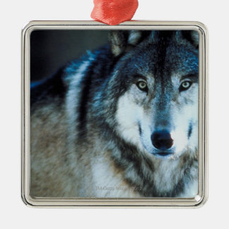 Timber wolf metal ornament