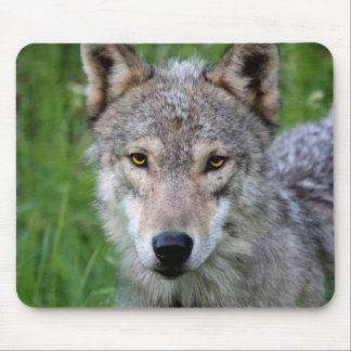 Timber Wolf Mouse Pad