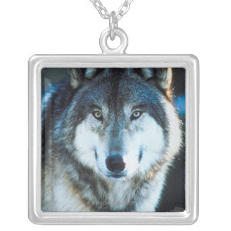 Timber wolf necklaces