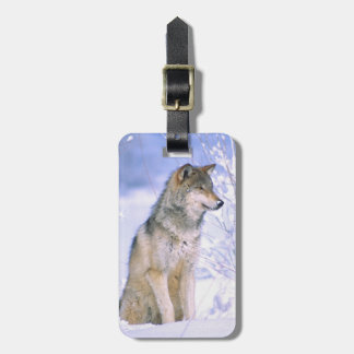 Timber Wolf sitting in the Snow, Canis lupus, Bag Tag