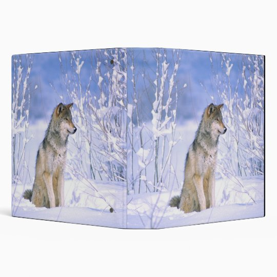Timber Wolf sitting in the Snow, Canis lupus, Binder