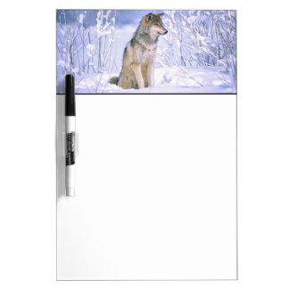 Timber Wolf sitting in the Snow, Canis lupus, Dry-Erase Whiteboards