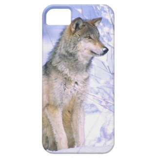 Timber Wolf sitting in the Snow, Canis lupus, iPhone SE/5/5s Case
