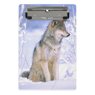 Timber Wolf sitting in the Snow, Canis lupus Mini Clipboard