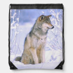 Timber Wolf sitting in the Snow, Canis lupus, Drawstring Bags