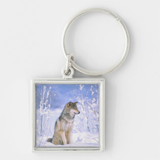 Timber Wolf sitting in the Snow, Canis lupus, Silver-Colored Square Keychain