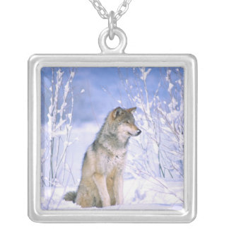 Timber Wolf sitting in the Snow, Canis lupus, Silver Plated Necklace