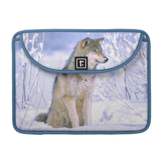 Timber Wolf sitting in the Snow, Canis lupus, Sleeve For MacBook Pro