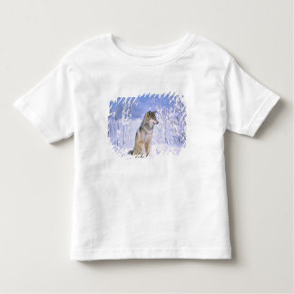 Timber Wolf sitting in the Snow, Canis lupus, Toddler T-shirt