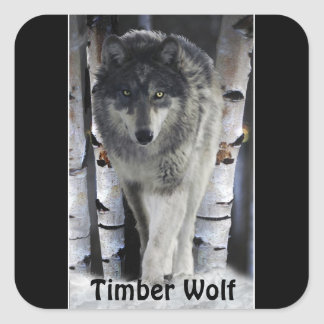 TIMBER WOLF Wildlife Supporter Artwork Square Sticker