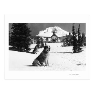 Timberline Lodge and Lady the owner s Postcards