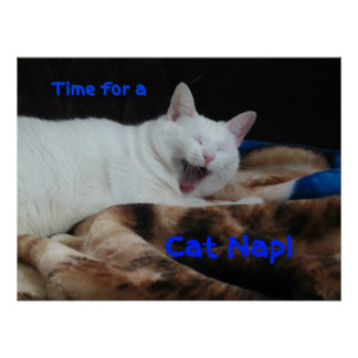 Time for a Cat Nap! Poster