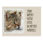 Time Spent With Cats Is Never Wasted Postcard