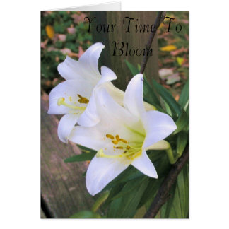Time To Bloom  - White Lillies Greeting Card