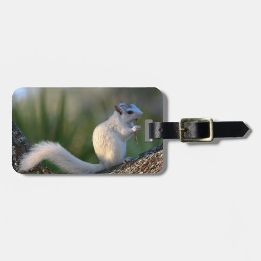 Time to Dance! Luggage Tags