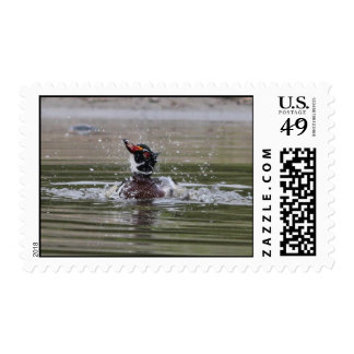 Time to Dry Off - Wood Duck Stamp