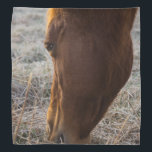 """Time To Eat Bandana<br><div class=""""desc"""">A beautiful brown horse eats frosty grass on a foggy morning in Ozark Missouri in late winter. Looking for more prints or products? Feel free to visit my store: http://www.zazzle.com/timelessmomentsphtgy  This photo was taken by Jennifer White with Timeless Moments Photography. All images are copyrighted &#169; Timeless Moments Photography/Jenni</div>"""