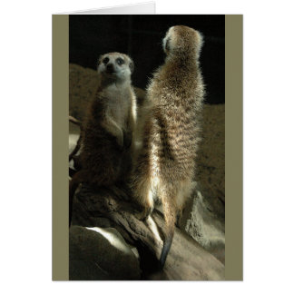 Time To Make Up! Meerkats Card