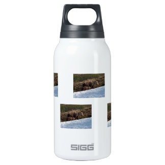 Time to Move On Insulated Water Bottle