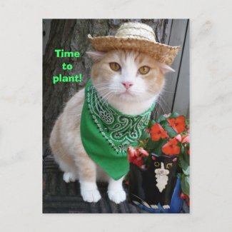 Time to Plant! postcard