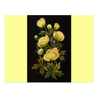 Timeless Globeflowers Postcard