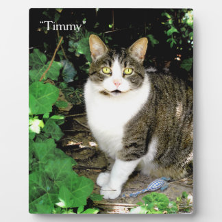 Timmy Plaque