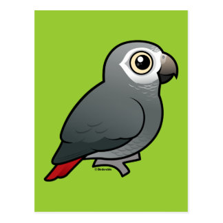 Timneh African Grey Parrot Post Cards