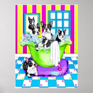 Tina de Boston Terrier por completo Posters