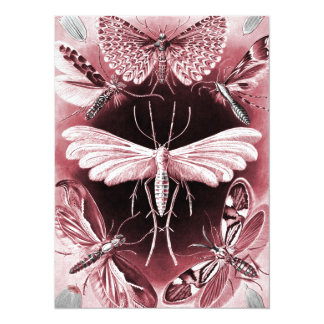 Tineida - Mothes Card