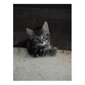 Tinker Kitten Postcard