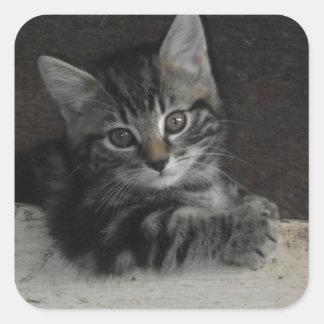 Tinker Kitten Square Sticker