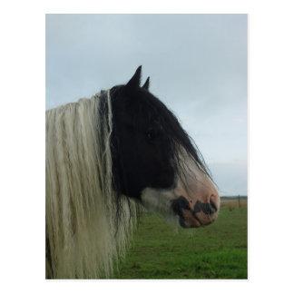 Tinker Profile Portrait Postcard