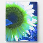 Tinted Blue Sunflower Plaque
