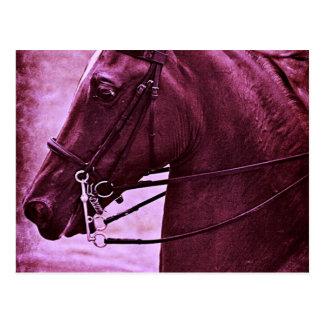 Tinted Saddlebred Post Card