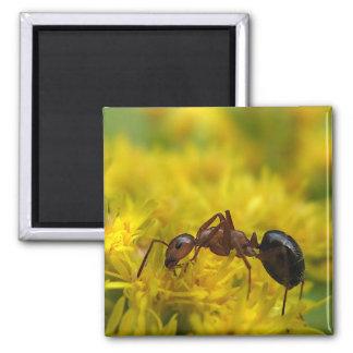 Tiny Ant on Goldenrod Magnet