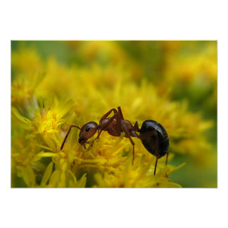 Tiny Ant on Goldenrod Posters