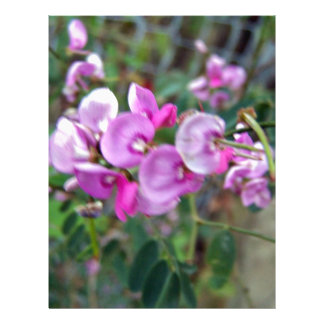 Tiny aromatic pink flowers flyer