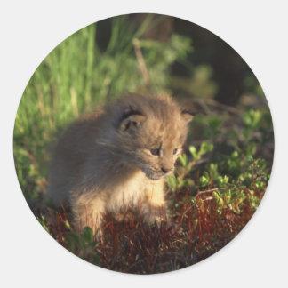 Tiny Baby Lynx Classic Round Sticker