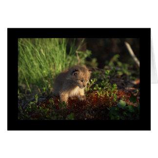 Tiny Baby Lynx Greeting Card